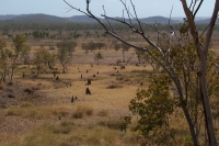 View from Site D; note termite mounds